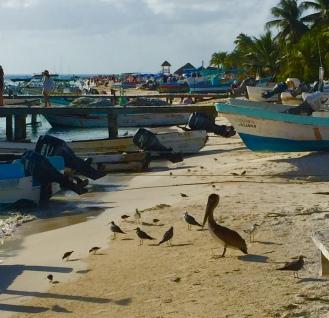 Pelicans and boats near the marina