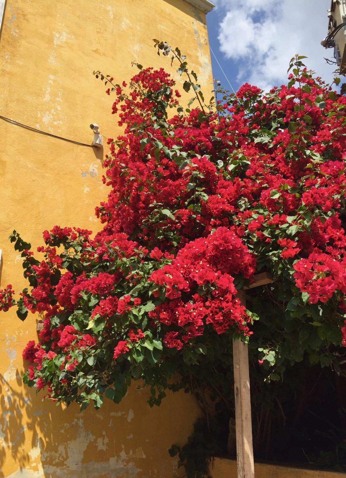 UNDER THE SPELL OF SAN MIGUEL – San Miguel de Allende,Mexico